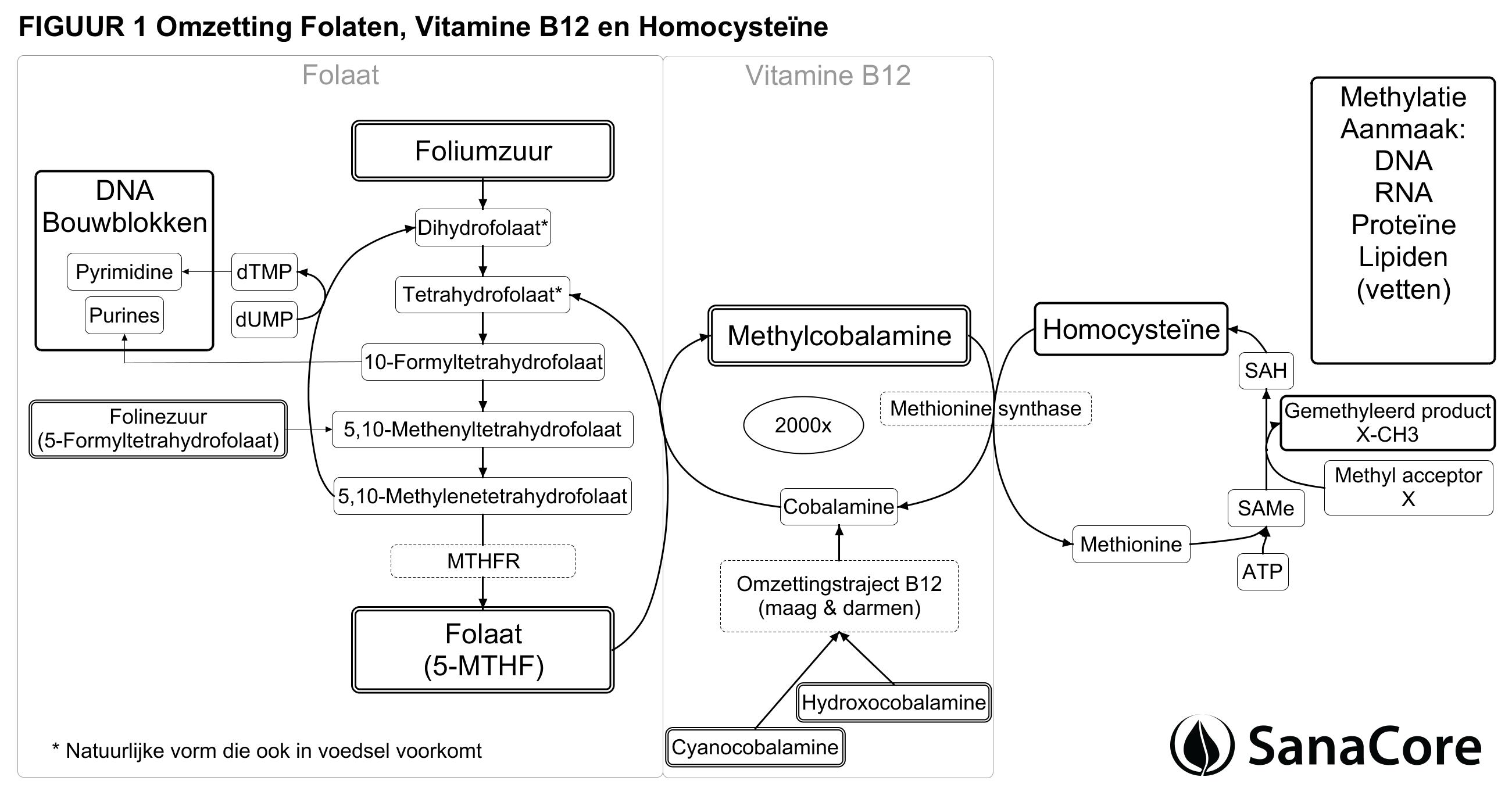 vitamine b12 teveel symptomen